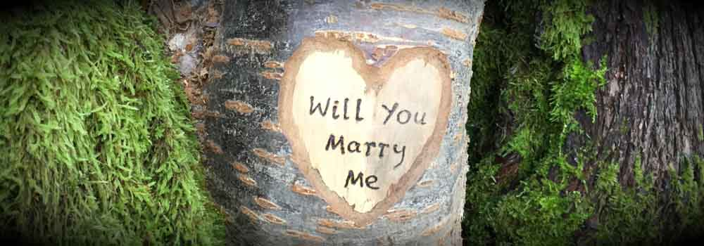 will you marry me carved in tree